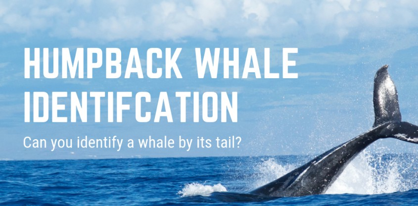 Kaggle Humpback Whale Identification Challenge 2019 2nd place code
