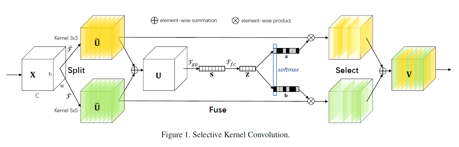 Try to implement the CVPR 2019 paper Selective Kernel Networks