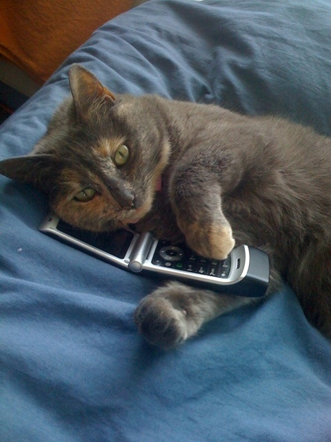 cat_on_the_phone